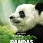 Free Advance Screening Passes To PANDAS